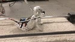 Ce bébé robot rampant est très inquiétant mais aussi très