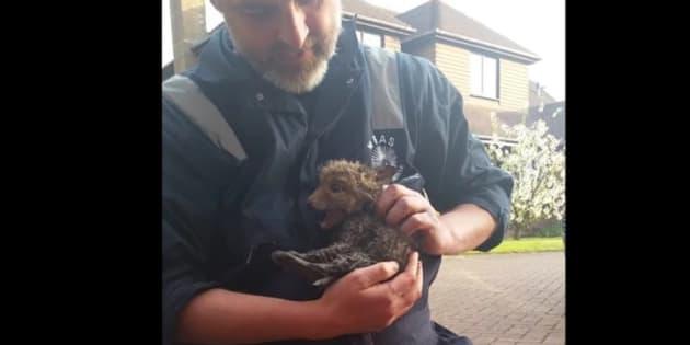 Baby fox rescue