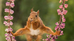 The Latest Entries From The Comedy Wildlife Photo Awards Will Cheer You