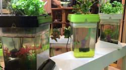 Un aquarium ou des plantes aromatiques? Les