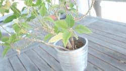 Votre plante va mal? Voici comment la