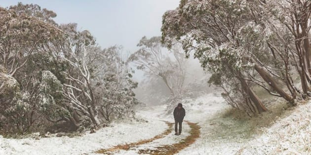 Just going for a walk. As you do. In Australia. In summer.