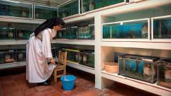 El santuario de la salamandra de Pátzcuaro es protegido por