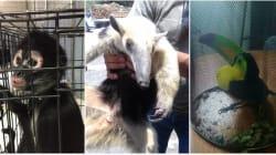 5 animales que han sido rescatados por la Brigada de Vigilancia Animal (además de la