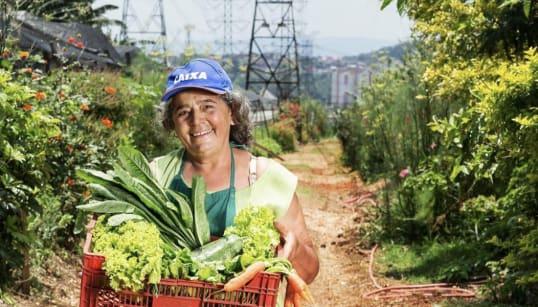 A ONG que transforma terrenos abandonados em hortas