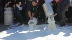 Salvini non riesce ad alzare il prezzo del latte a un euro. I pastori resistono: