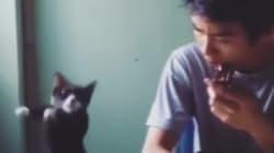 El vídeo viral del gato que toca una melodía del