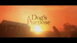 Cancelan premier de película por el video del perro