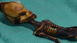 Non, ce mystérieux squelette découvert en 2003 n'était pas un