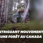 Cette forêt a l'air de respirer (mais il s'agit d'un phénomène bien plus