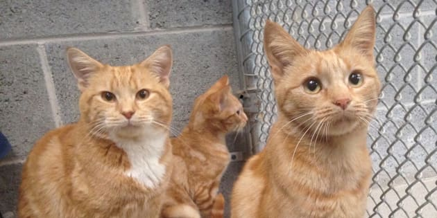 These gorgeous cats were found abandoned in a house in Burwood and were only saved thanks to a kind neighbour who fed them.