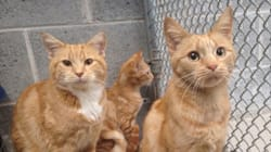 Abandoned Ginger Cat Family Is A Rare Bonded