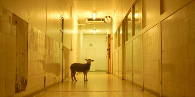 """""""Gorge, coeur, ventre"""", le film dans lequel les animaux ne sont pas comédiens (affiche du film)"""