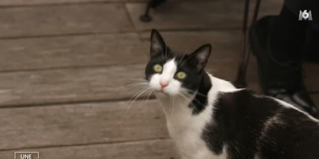 """Ce chat a été l'autre star d'""""Une ambition intime"""" sur M6"""