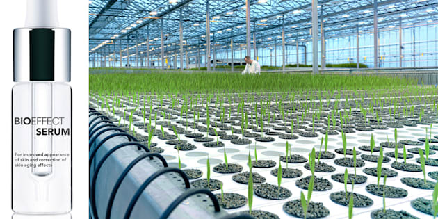 The Bioeffect greenhouse, in which the bio-engineered barley is grown and monitored in various stages to finally fill these tiny glass bottles.