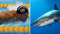 Michael Phelps Just Raced A Great White Shark (As You
