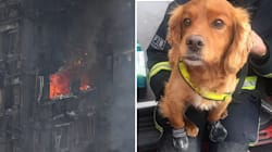 How Service Dogs Are Aiding The London Fire Brigade In Grenfell Tower