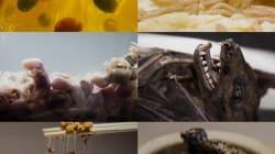 VIDEO: Conoce el museo de la comida