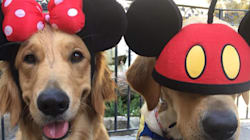 Allow These Service Dogs' Disneyland Trip To Delight Your