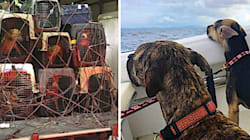 Woman Charters Jet To Rescue 300 Pets Stranded By