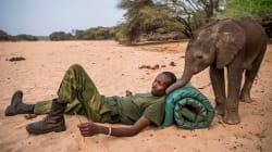 Elefantes bebé son salvados por tribus