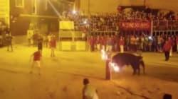 VIDEO: Un toro se suicida después de que le prenden fuego a sus