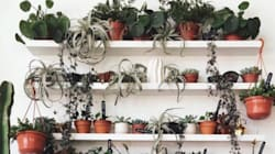 17 Instagram Accounts Giving Us Green-Fingered