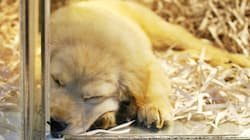 California Close To Banning Pet Shop Sales Of Non-Rescue Cats, Dogs And