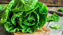 The Best Salad Greens, Ranked By