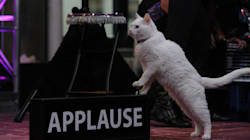 This Travelling Cat Circus Has Helped Save More Than 200 Feline