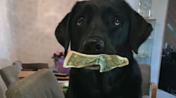Dog Hoards Money So She Can Pay For Treats