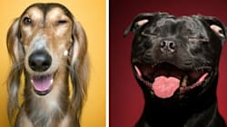 14 Dog Portraits That Show The Adorably Human Side Of