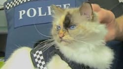 Adorable Fluffy Cat Joins New Zealand Cop On His