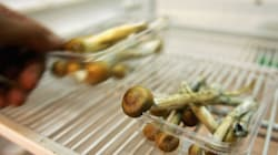 Magic Mushrooms Could 'Reset' The Brain Of People With