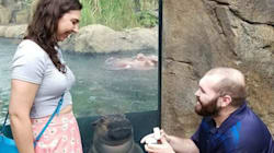 Adorable Baby Hippo Photobombs Couple's