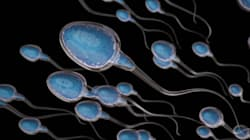 Sperm Counts Are Down, But It Doesn't Mean There's A Male Fertility
