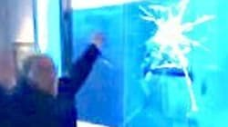 Museum Visitor Loses His S**t After Tapping On 'Shark'