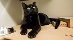 This Animal Shelter Is Turning Black Friday Into 'Cat