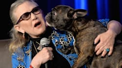 La tierna participación del perro de Carrie Fisher en 'Star Wars: The Last