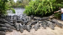2,000 Gators Aren't Going Anywhere: Park Promises Amid Hurricane