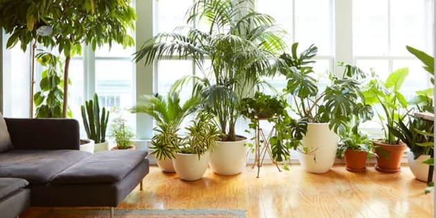 Espada-de-São-Jorge, Pata de Elefante e Costela de Adão são plantas perfeitas para o seu apartamento.