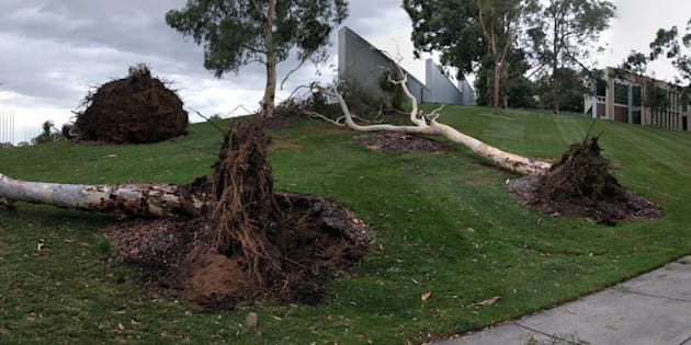 The Parliament House lawns had a tumultuous time on Friday afternoon.