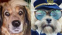 Jimmy Fallon's Halloween Dogs Round-Up Is Too Cute For