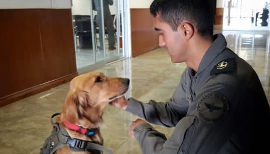 📷 Laica, la perrita de soporte emocional en la Escuela de Aviación