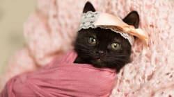 La fotógrafa que toma retratos de recién nacidos... de gatitos recién