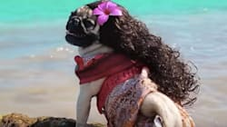 There's Something Wonderful About A Pug Going Full