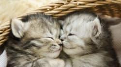 New Perfume Promises The Fragrance Of A Kitten's