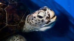La tortuga que tenía 915 monedas en su interior