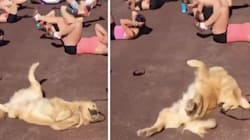 Work Your Abs Laughing At This Ridiculous Dog Doing Human