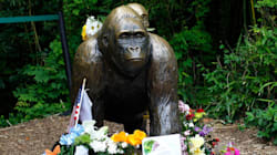 The Internet Mourns One-Year Anniversary of Harambe's